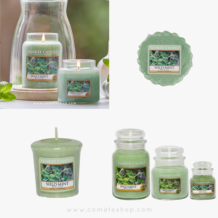 nouvelle-collection-pure-essence-bougies-yankee-candle-parfum-wild-mint-menthe-sauvage